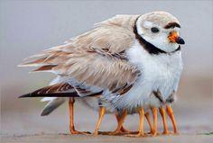 baby birds seeking warmth.