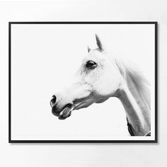 Horse Print Black and White Photography by ScandiHomeDesign