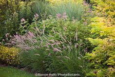 Plant lover 39 s garden hyland garden design gardens for Small ornamental grasses for borders