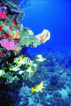 Cozumel Reef - my dream spring break is tanning on the beach and swimming with brightly colored fish right off the coast