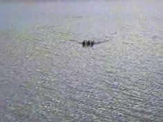 SB3 bait boats - YouTube