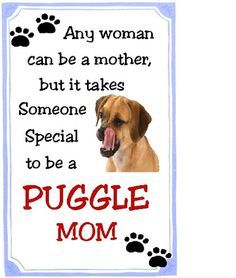 5c7108473fab8cde478e0883788adab2 so true westie?b=t 76 best puggle dog holly furry daughter images puggle dog