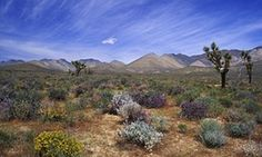 The Obama administration created three new national monuments protecting million acres of California desert. Barstow California, Green News, California Destinations, Georges Seurat, Sedona Arizona, Pierre Auguste Renoir, Famous Places, Claude Monet, Best Photographers