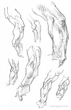 bridgman art book, interlocking muscles, arm anatomy