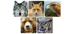 Fox, owl, wolf, bear, and hawk: the meaning behind the top 5 spirit animals   GaiamTV - Seeking Truth