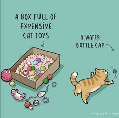 You are in the right place about Cat Toys ball Here we offer you the most beautiful pictures about t Crazy Cat Lady, Crazy Cats, Comic Cat, Round Robin, Funny Doodles, Cat Comics, Mama Cat, Cat Behavior, Mundo Animal