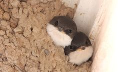 omg look at these little buddies