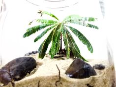 Terrarium Terrarium Plants, Plant Leaves, Green
