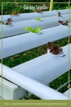Unlike traditional gardening where plants collect their nutrients from the soil, hydroponic plants collect their nutrients from a solution dissolved in water and applied in different ways. Some techniques used are applying mist to the plants, flooding with water, or roots being suspended and dipped in water.