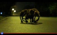 La buffa carica del ragno-cane #scherzi #candidcamera #polonia #europa