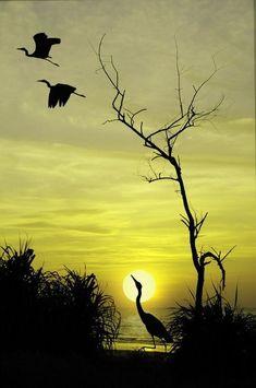 Silhouette Art Painting Animals Beautiful 18 New Ideas Beautiful Sunset, Beautiful Birds, Beautiful World, Animals Beautiful, Nature Pictures, Beautiful Pictures, Amazing Nature, Belle Photo, Beautiful Creatures