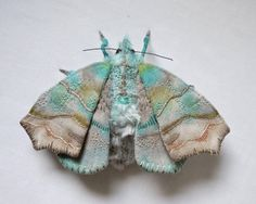 North Carolina-based artist Yumi Okita creates these beautiful textile months, butterfly and other insect sculptures using various embroide...