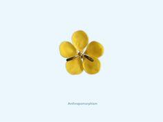 Anthropomorphism - Cassia