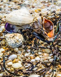 shells at Orient State Park, Orient Point, New York (09/03/2015)