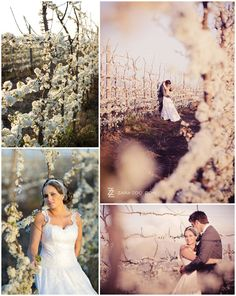 Number 4 & 3 in our Top 10 Cape Town Wedding Venues. Cape Town Wedding Venues, Wedding Pics, Wedding Dresses, V&a Waterfront, Sweet Memories, One Shoulder Wedding Dress, Backdrops, Zara, Weddings