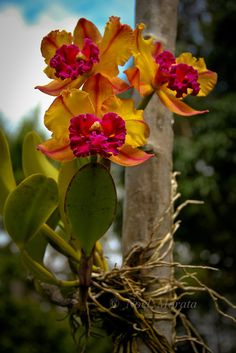 orchids, so exquisite!