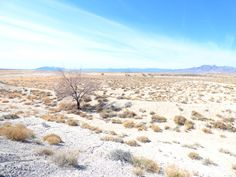 Lone Tree White Sand Desert Landscape Print by LiveFreeTravel Nature Photography, Travel Photography, Lone Tree, Landscape Prints, Desert Landscape, Horseback Riding, Stargazing, Beautiful Landscapes, State Parks