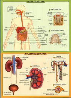 lidské tělo tabulka.4.jpeg