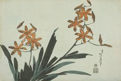 1832c Orange Orchids - Blackberry Lily, from an untitled series of Flowers colour woodblock print 25.5 x 37.7 cm Art Institute of Chicago, IL