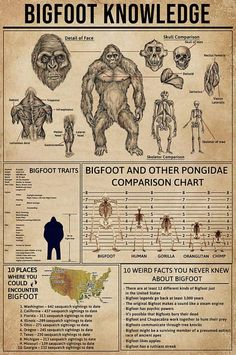 Bigfoot Knowledge shirts, apparel, posters are available at Ateefad Outfits Store. Mythological Creatures, Fantasy Creatures, Mythical Creatures, Bigfoot Photos, Real Bigfoot Pictures, Bigfoot Stories, Myths & Monsters, Sea Monsters, Dragons