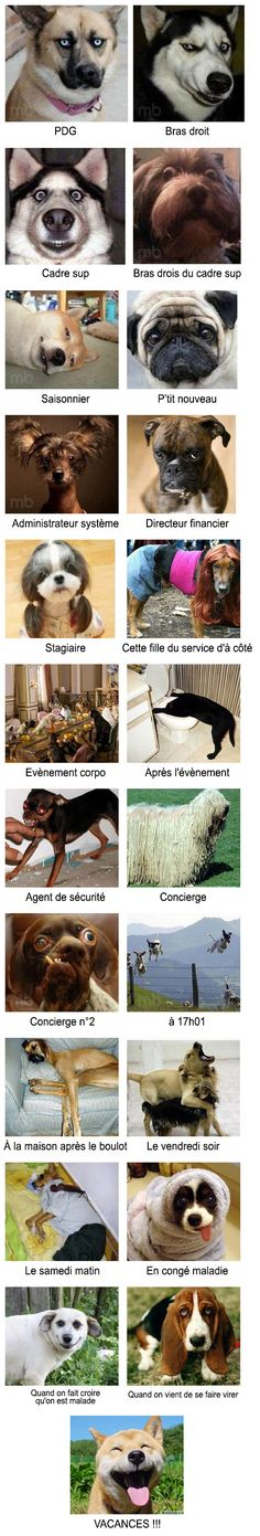 Du PDG au stagiaire : la hiérarchie en entreprise vue par des chiens From the CEO to the trainee: the corporate hierarchy seen by dogs Animals And Pets, Funny Animals, Cute Animals, Image Fun, Lol, Happy Fun, Funny Dogs, Make Me Smile, Dog Cat