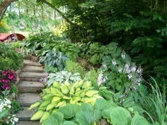 Hostas lining shade garden path with steps