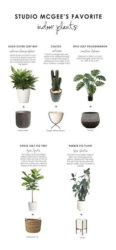 Our Favorite Plants How to Keep Them Alive - House Plants - ideas of House Plants - Shop Concrete Fluted Planter Large 23 Bullet Planter White Grooved Droplet Planter Seagrass Basket Modernica Case Study Ceramic Cylinder Planter With Wood Stand and Fiddle Leaf Fig Tree, Decoration Plante, Decor Scandinavian, Studio Mcgee, Plant Decor, Indoor Plants, Hanging Plants, Fig Plant Indoor, Large Indoor Planters