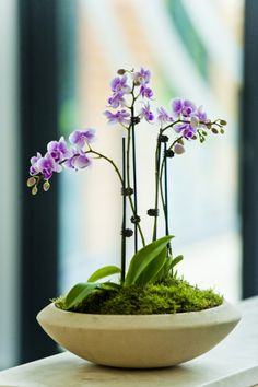 Orchid display in medium stone bowl