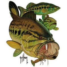 Guy Harvey bass design...totally getting this shirt for xmas