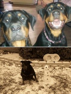 If you're looking for reliable dog training services, hire the team of experts from Rotten Rotties Adventures. They provide excellent doggie boot camp, puppy classes, dog kennel and more.