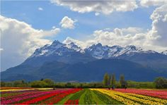 Trevelin en Chubut (redes sociales). Largest Countries, Countries Of The World, Patagonia, South America, Beautiful Pictures, Mountains, Landscape, Country, City