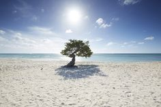 Sunshine and white sands; Aruba is a photographer's dream...
