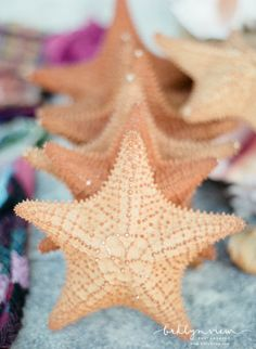 Starfish from Cancun Mexico Pottery Patterns, I Love The Beach, Cancun Mexico, Happy Things, Beach Babe, Destination Wedding Photographer, Starfish, Wedding Photos, Sea