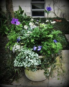 winter flower container