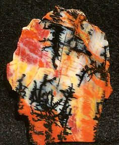 Holbrook, AZ - picture wood agate