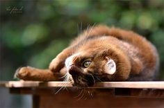 KIO Photographer — «kio-fotos-somalis-ruddy-065.jpg» на Яндекс.Фотках