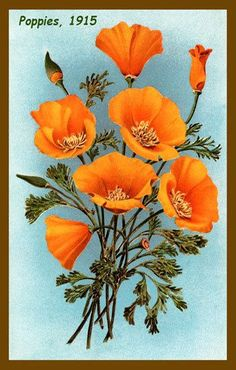 california poppy flower - Google'da Ara