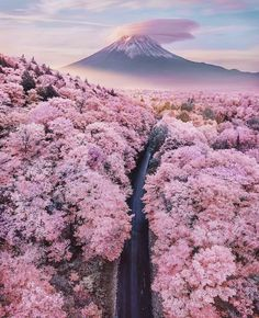 Truly Astounding Places To Visit In Japan Mt Fuji overlooking a sea of blossom trees - Japan - 15 Truly Astounding Places To Visit In Japan.Mt Fuji overlooking a sea of blossom trees - Japan - 15 Truly Astounding Places To Visit In Japan. Cherry Blossom Japan, Cherry Blossom Season, Japanese Cherry Blossoms, Nature Aesthetic, Travel Aesthetic, Aesthetic Japan, Beige Aesthetic, Nature Pictures, Beautiful Pictures