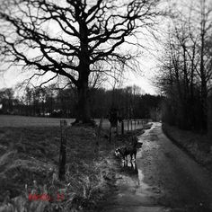 "Ein grauer Tag der Donnerstag 4.2.2016 vielen Dank IG thank you #landschaft #travel #iphone6sphotography #hollygo #oeb #oldenglishbulldog #bully #bulldog #regentag#februar2016 #nature #naturelovers #lovebulldog #hundeliebe #blackandwhite #photoblackandwhite #pfütze#like4like #cool #follow #beautiful #Ruhrgebiet #love_ruhrgebiet#tree #treelovers #loves_united_trees by molto_11 Follow ""DIY iPhone 6/ 6S Cases/ Covers/ Sleeves"" board on @cutephonecases http://ift.tt/1OCqEuZ to see more ways to…"
