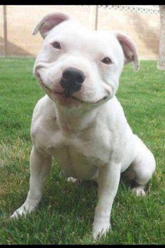 25 Photos of Smiles that Will Make You Smile | HEAVY