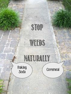 pesky weeds naturally and for good in walkways and rocky borders with Baking Soda or Cornmeal.Stop pesky weeds naturally and for good in walkways and rocky borders with Baking Soda or Cornmeal. Garden Weeds, Lawn And Garden, Garden Art, Terrace Garden, Garden Paths, Gutter Garden, Weed Killer Homemade, Lawn Care, Gardening Tips