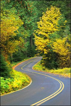 Aufderheide Memorial Drive, part of the West Cascades National Scenic Byway in the Willamette National Forest, Cascade Mountains, Oregon. Beautiful Roads, Beautiful Streets, Beautiful Landscapes, Beautiful Places, Autumn Scenery, Autumn Nature, Train Pictures, Forest Road, Cascade Mountains