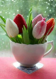 """Tulips from my garden.love Tulips The """"pad"""" that the cup sits on is a book about love and the history of V. To My Friends. Tulips Flowers, My Flower, Fresh Flowers, Spring Flowers, Flower Power, Beautiful Flowers, Roses, Teacup Flowers, Daffodils"""
