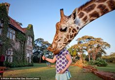 Giraffe bites off child's head.