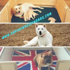 56 Best Whelping Box For Sale Images In 2019 Whelping Box Boxes
