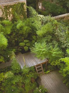 Jardin et terrasse : zen, design, en bois - House With A Garden Back Gardens, Small Gardens, Outdoor Gardens, Roof Gardens, City Gardens, Jungle Gardens, Zen Design, Wood Design, Small Urban Garden Design