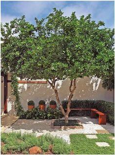 Jardim pequeno com árvore e bancos proporcionando sombra e lazer! #garden #tree #furnite