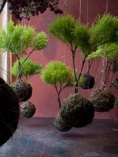 String Plants