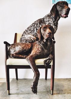 GSPs - so like German Shorthair Pointers. Big Dogs, I Love Dogs, Cute Dogs, Dogs And Puppies, German Shorthaired Pointer, Hunting Dogs, Family Dogs, Animals Beautiful, Beautiful Dogs