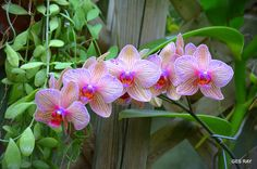 Orchid by Grace Ray on 500px